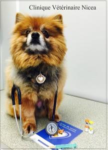 Vaccination du chien -Nicea