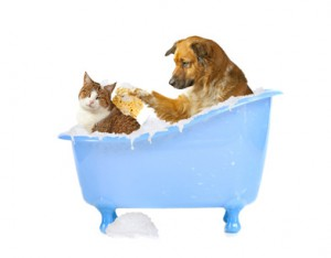 Shampooing chien chat - Fotolia -
