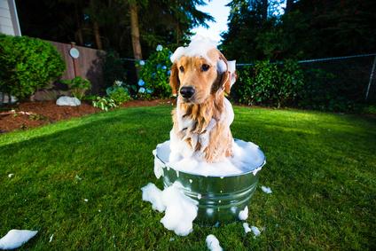 Laver son chien - Fotolia -