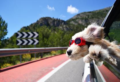 Happy dog - Fotolia