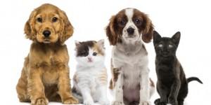 Nouvelle Approche Vaccinale du Chien et du Chat