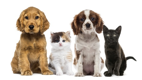 Group of kittens and dogs - Fotolia -