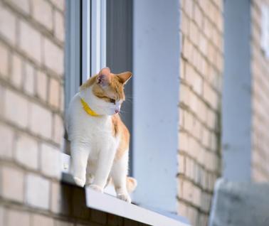 Chat au bord de la fenêtre - Fotolia