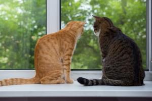 2 chats assis à la fenêtre - Fotolia