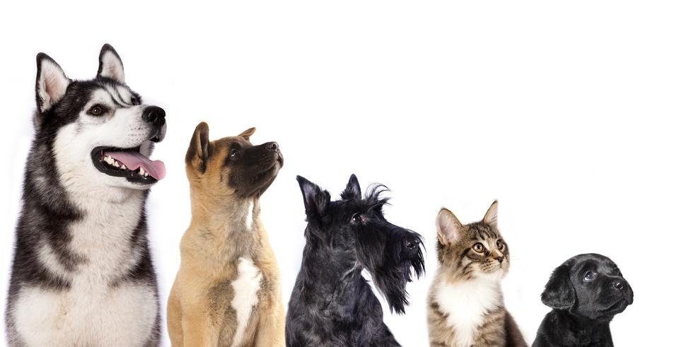 Chien et chat - Fotolia -