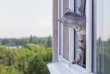 Chat regardant à la fenêtre - Fotolia