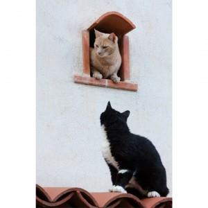 Chats - Nicea -
