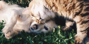 Coup de Chaleur chez le chien et le chat