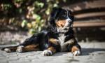La Maladie Rénale Canine