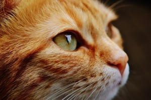 animal-animal-photography-cat-115011-pexels