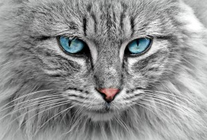 animal-cat-eyes-33537-pexels