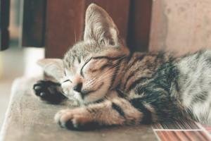 adorable-animal-animal-photography-1056251 pexels.com