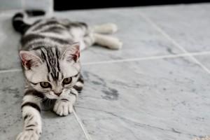 adorable-animal-baby-479009 pexels.com