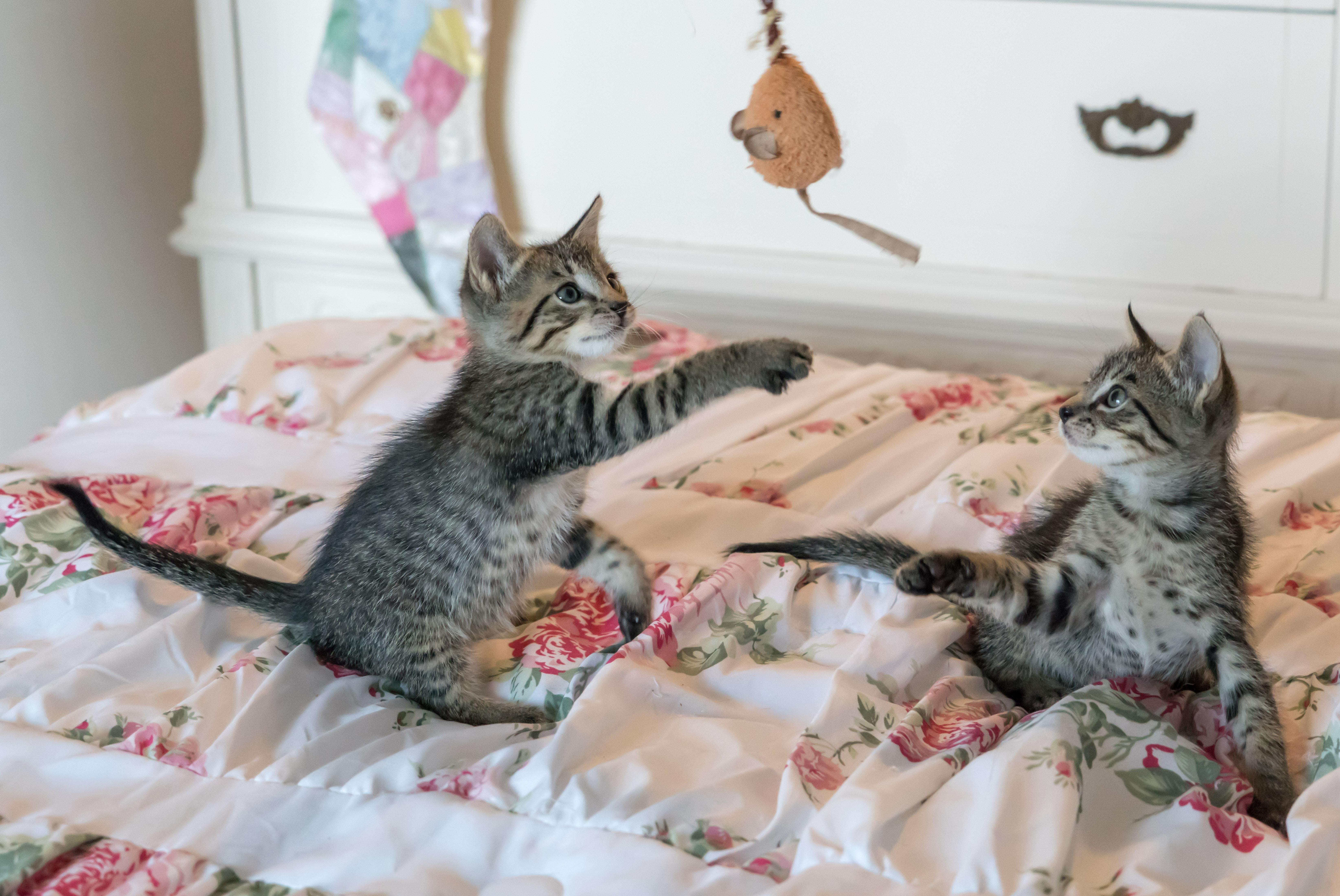 adorable-animals-bed-160755 pexels.com