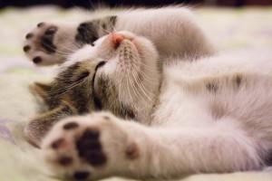 animal-cat-face-close-up-416160 pexels.com