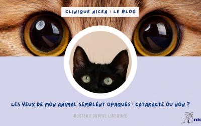 Copie de Proposition visuels Clinique Nicea