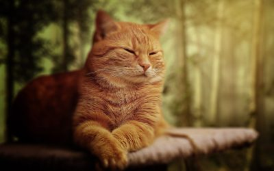 adorable-animal-beautiful-208805