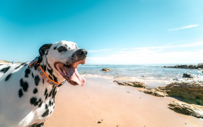 photography-of-a-dog-on-seashore-805295